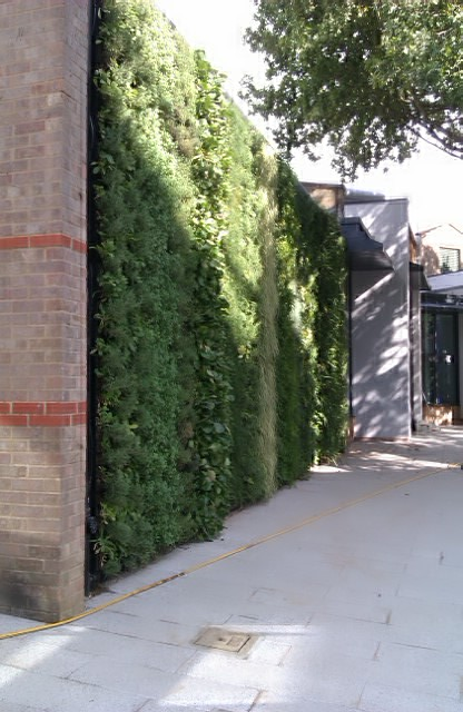 The living wall of the Grimond Building at the University of Kent, UK.