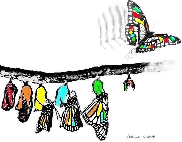 Butterfly etakes flight 3