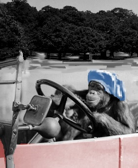 chimp at wheel