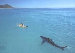 shark canoe