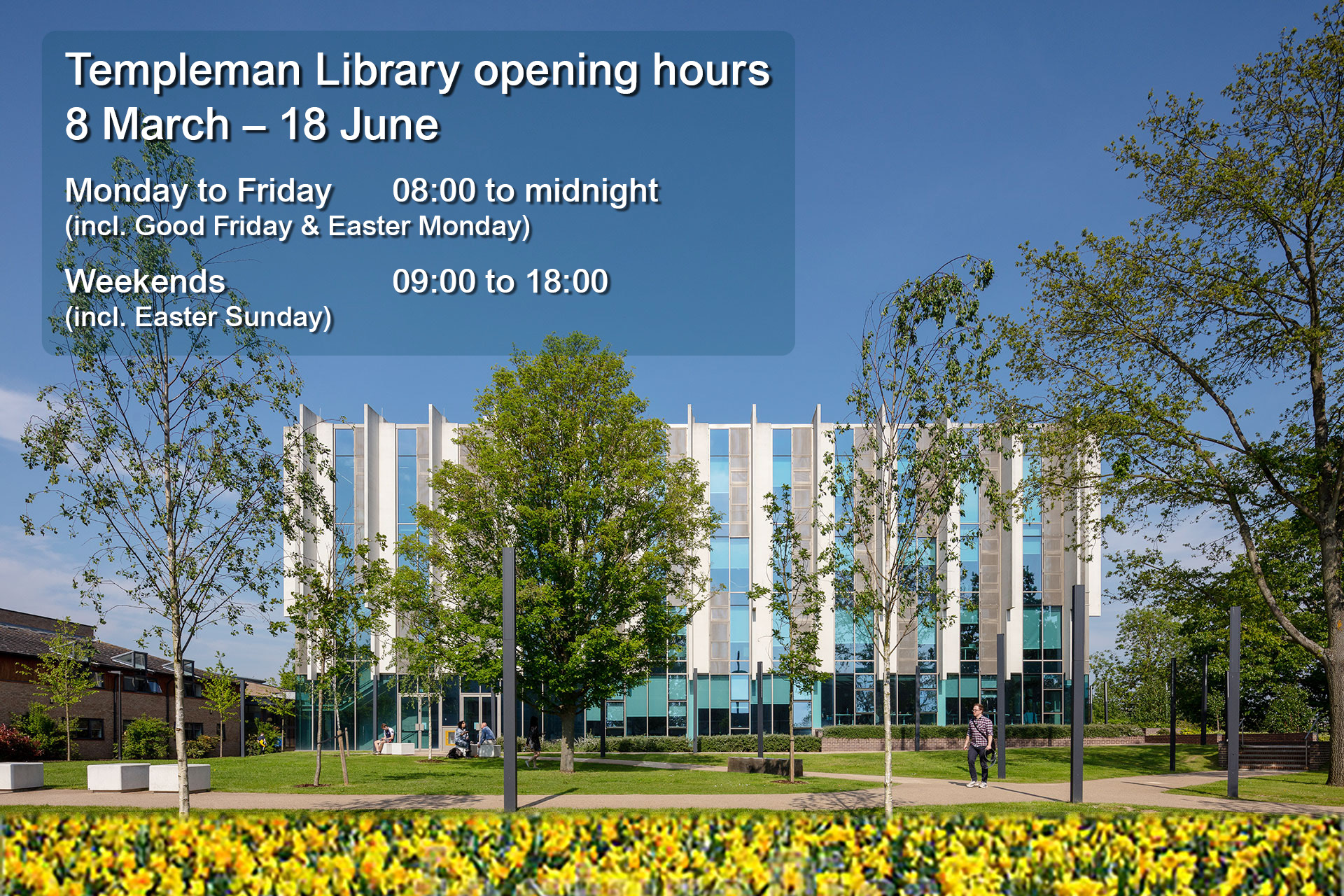 Templeman Library with field of daffodils