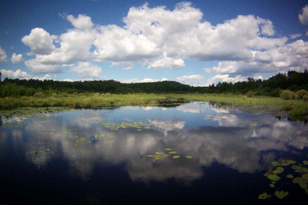 Ecosystem - photo of Sudbury lake