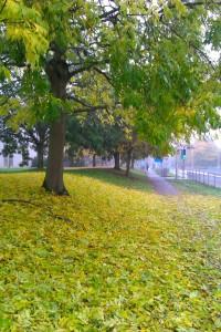 Autumn leaves on campus