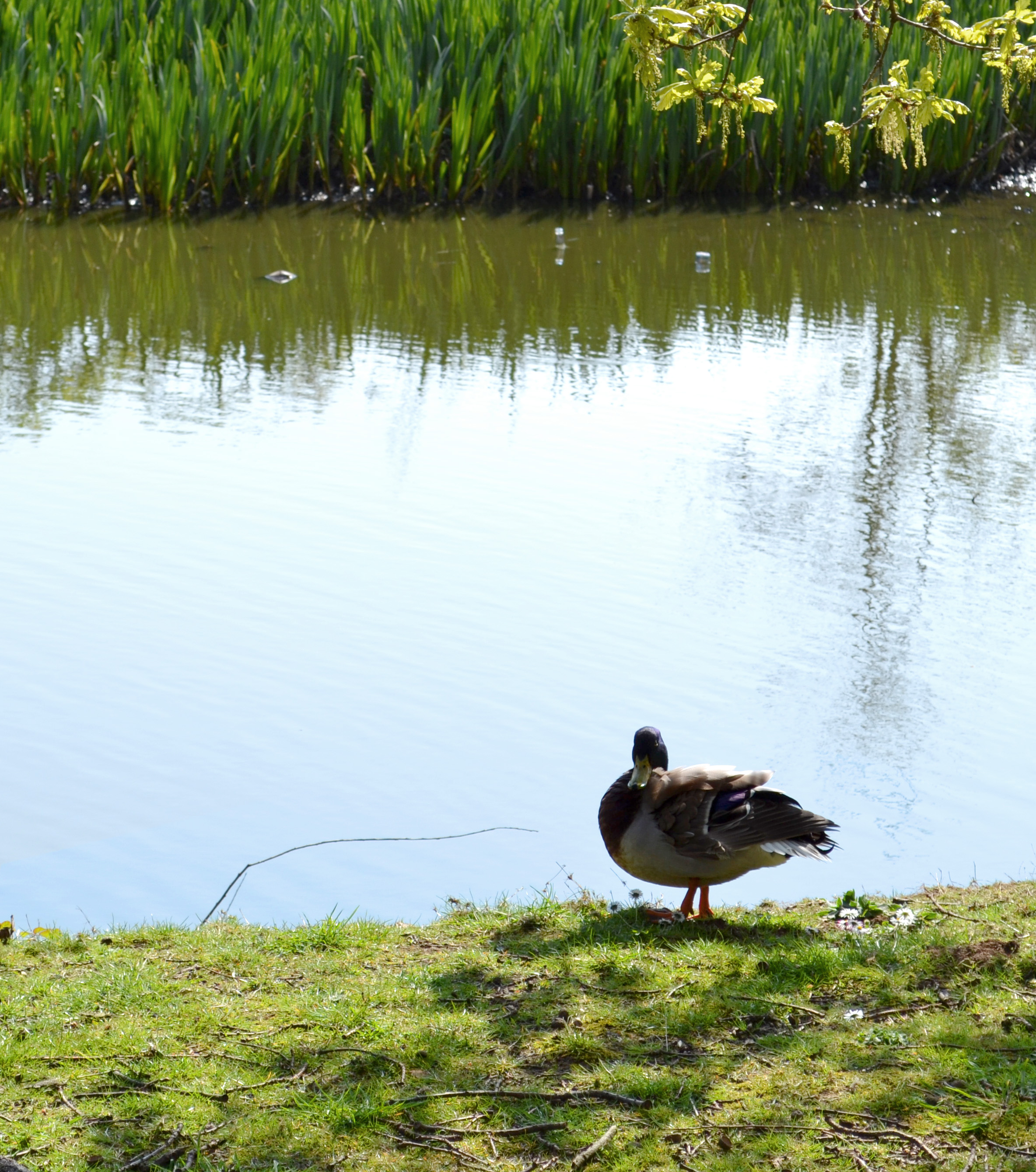 November 2014 for Design duck pond