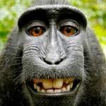 monkey_selfie_contentfullwidth