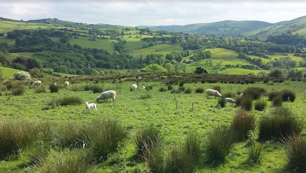 A moorside view on a May morning in the Peak District