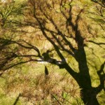 My shadow up a tree :)