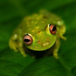 Frog103_27_06_2013 (36)