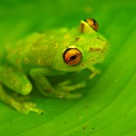 Frog103_27_06_2013 (63)