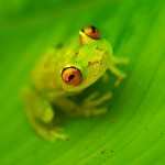 Frog103_27_06_2013 (64)