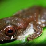 Frog102_PV2 (11)