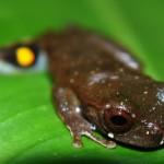Frog102_PV2 (6)