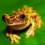 Frog78_PV2 (8)