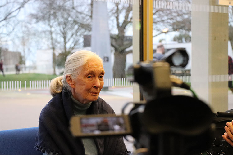 Jane Goodall being interviewed by KMTV.