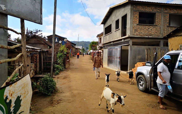 A man walks his goats down Andasibe Village's main street.