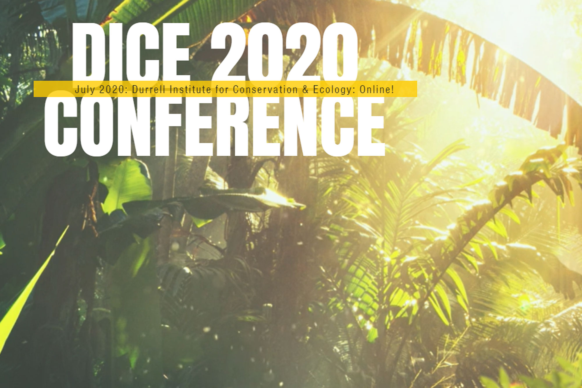 DICE Conference 2020 banner with background image of sunlight streaming through tropical forest canopy