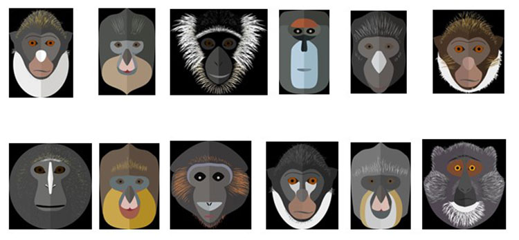 Illustrated faces of different species of the Guenon genus of monkey.