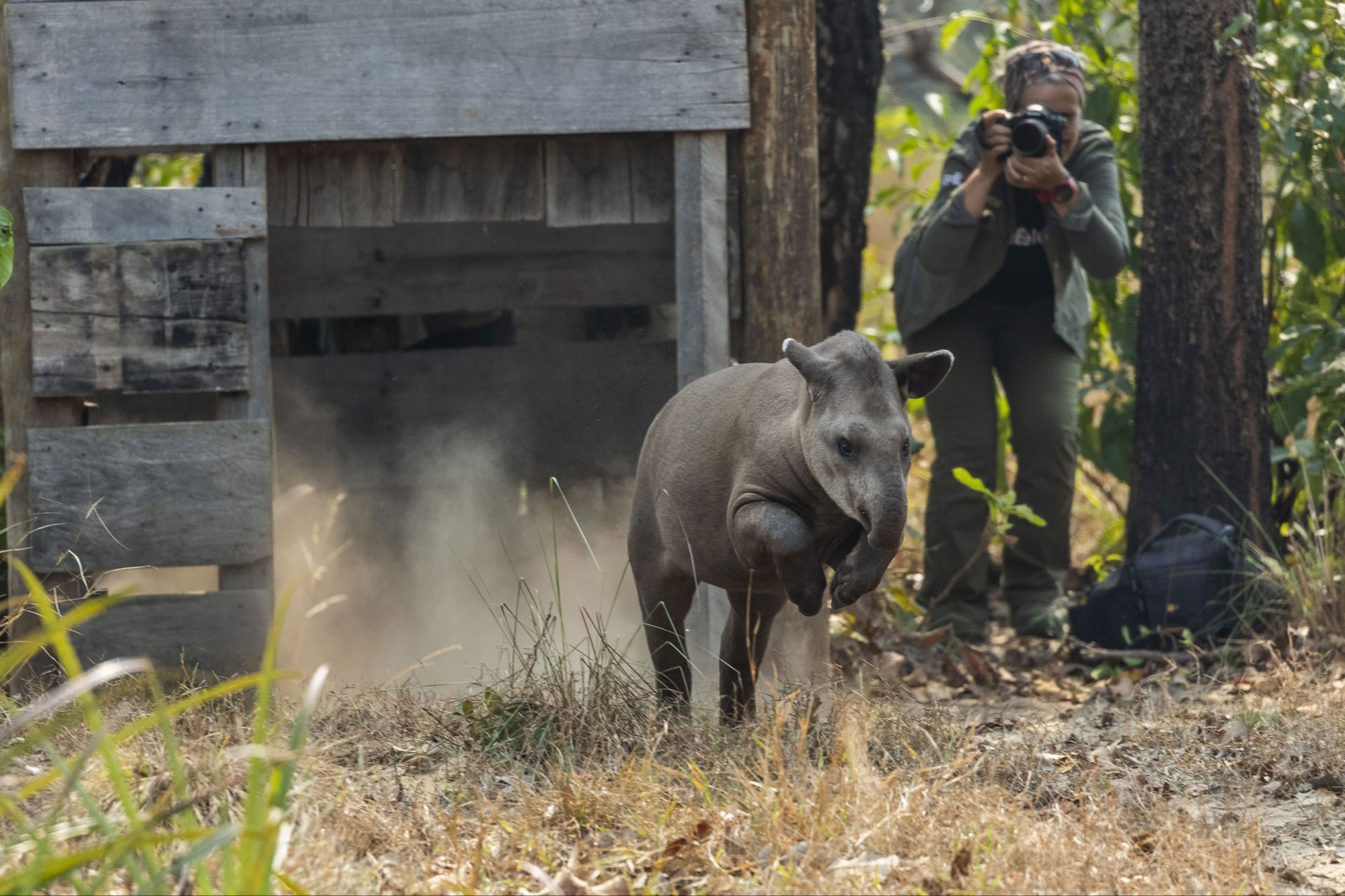 Patrícia Medici photographing Tapirs in Brazil