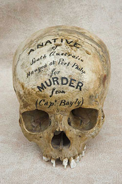 Skull with text written across its frontal stating 'A native of South Australia hanged at Port Philip for Murder'
