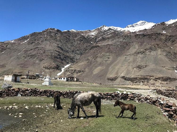 A Himalayan farm with livestock grazing