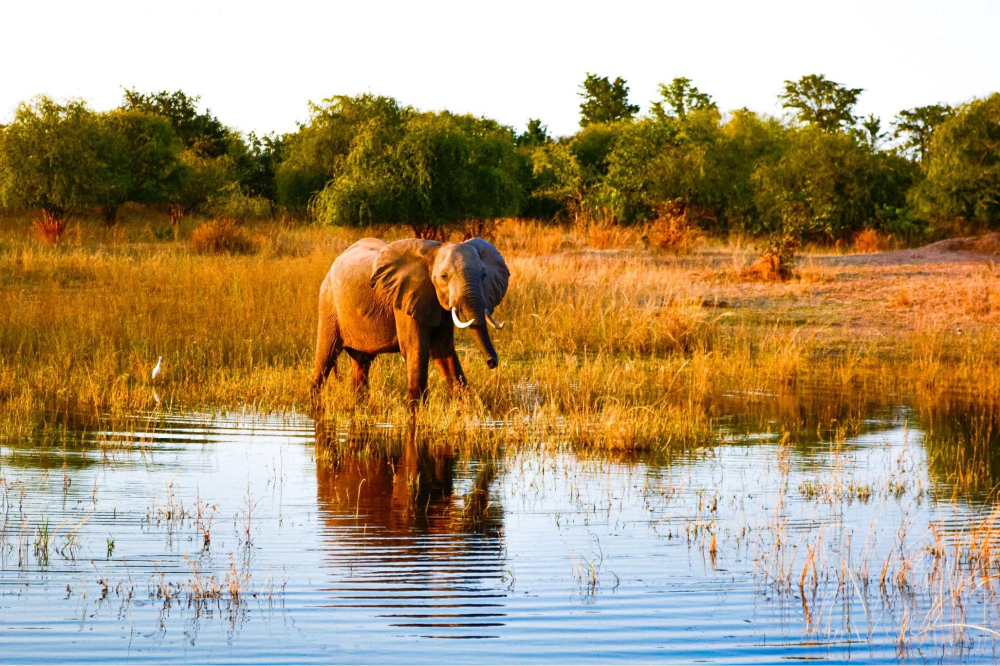 Baby elephant at Lake Kariba, Siavonga, Zimbabwe