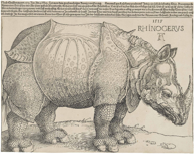 Fig.3. Albrecht Dürer's The Rhinoceros, 1515. The original was a pen and ink drawing. The above is a woodcut print, 23.5x29.8cm. National Gallery of Art, Washington.