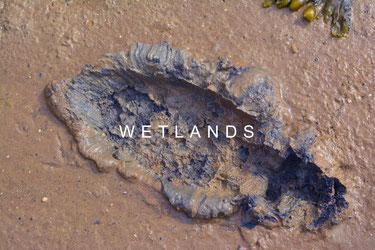 wetlandslogo