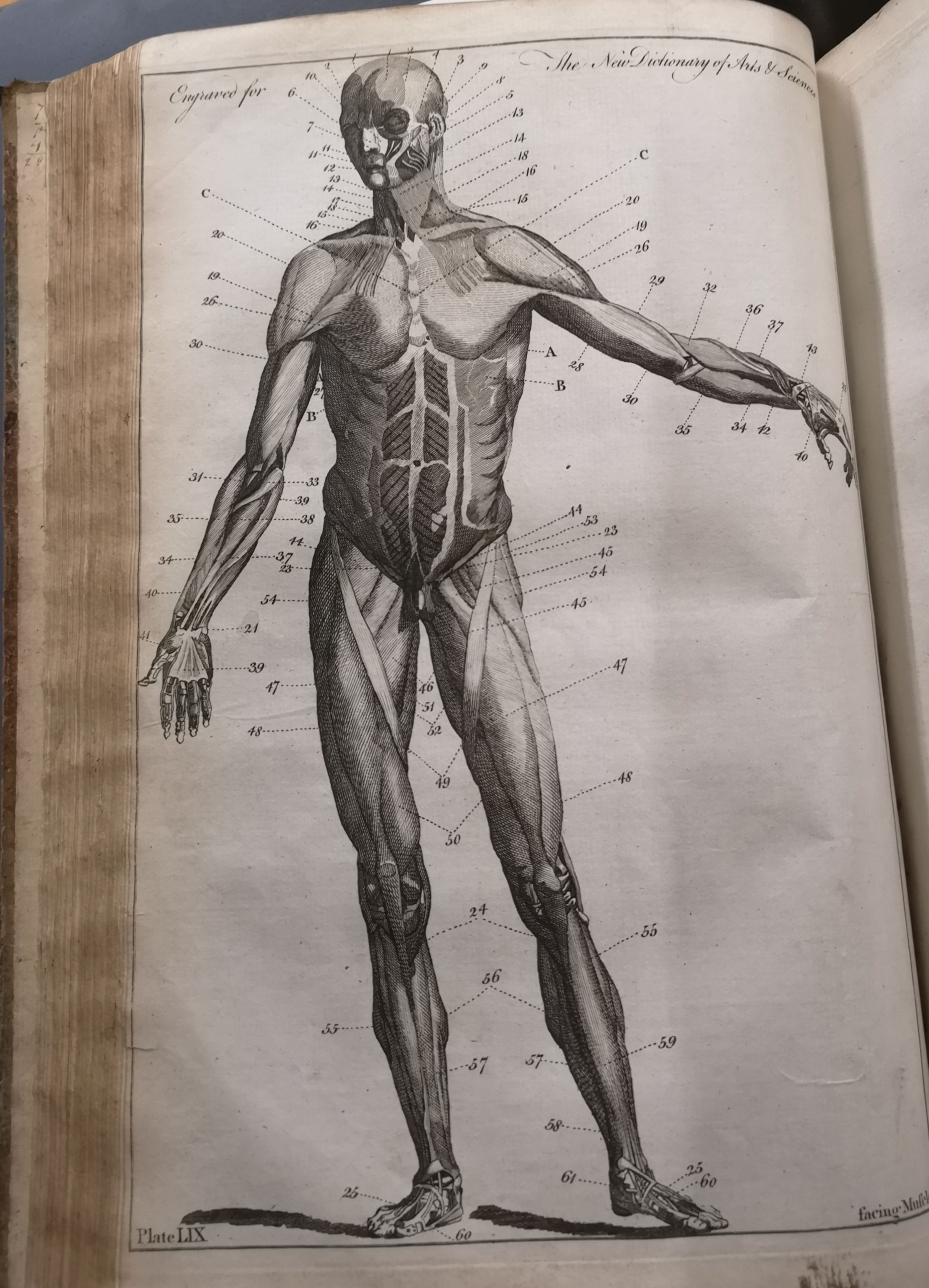 Anatomical drawing of man