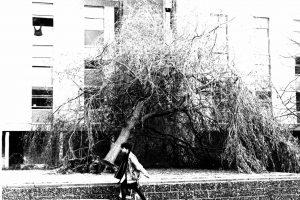 Storm damage Keynes 1987
