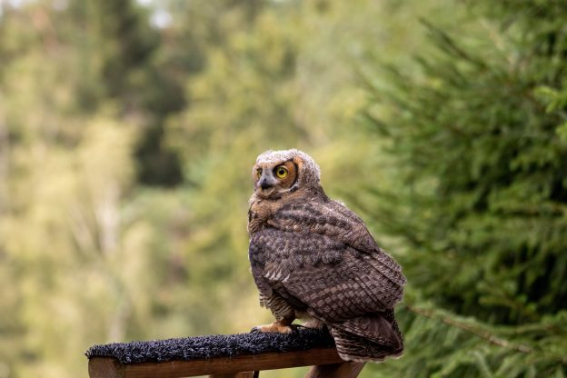 Owl sat on perch