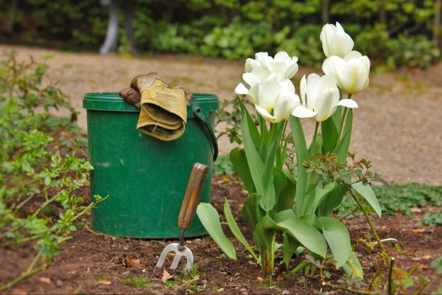 Top 10 Gardening Tips Staff And Student News