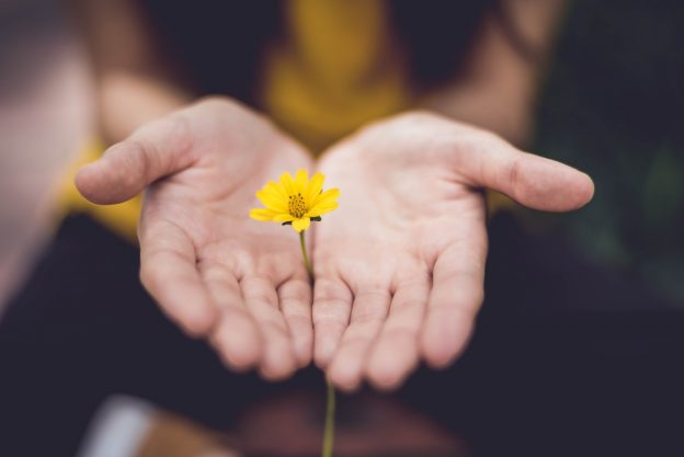 Person holding a yellow flower in their palms